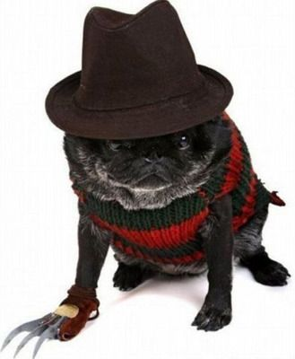 30 Awesome Dog And Cat Halloween Costumes | Dog dresses, Dog and ...