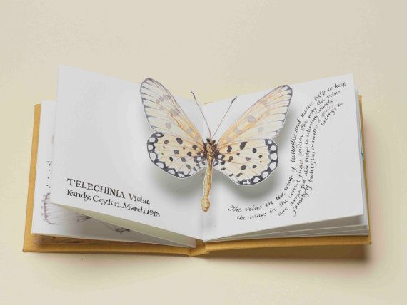 Handmade Pop-Up Butterfly Book by Carol Kearns. Illustrates butterflies in the Fountaine-Neimy Collection at Norwich Castle Museum & includes details of the life of Margaret Fountaine, who donated the large butterfly collection & 12 journals detailing her life from the age of 15. The designs for the book feature illustrations in pen & ink w/ watercolor, calligraphy & hand marbled end papers. Book is case bound in bristol board & bookcloth.