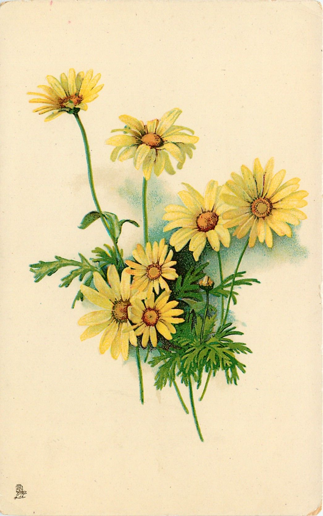 Yellow And Brown Daisy / In the west, the daisy is a symbol of simplicity, chastity and transformation.