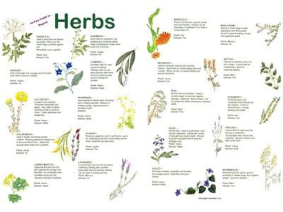 witches herbs | Herbs Easy Guide Poster - £2 50 : Spellweaver, The