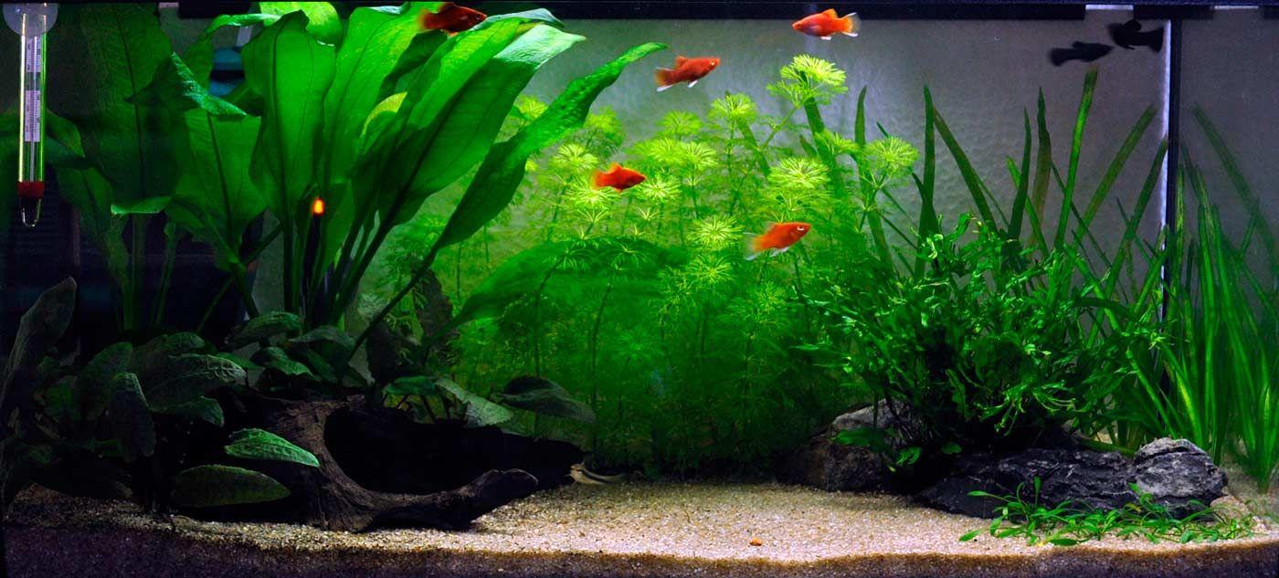 Pflanzenset Fur Ein 54 Liter Einsteigeraquarium Layout 1 Von Tropica Planted Aquarium Aquarien Susswasseraquarium