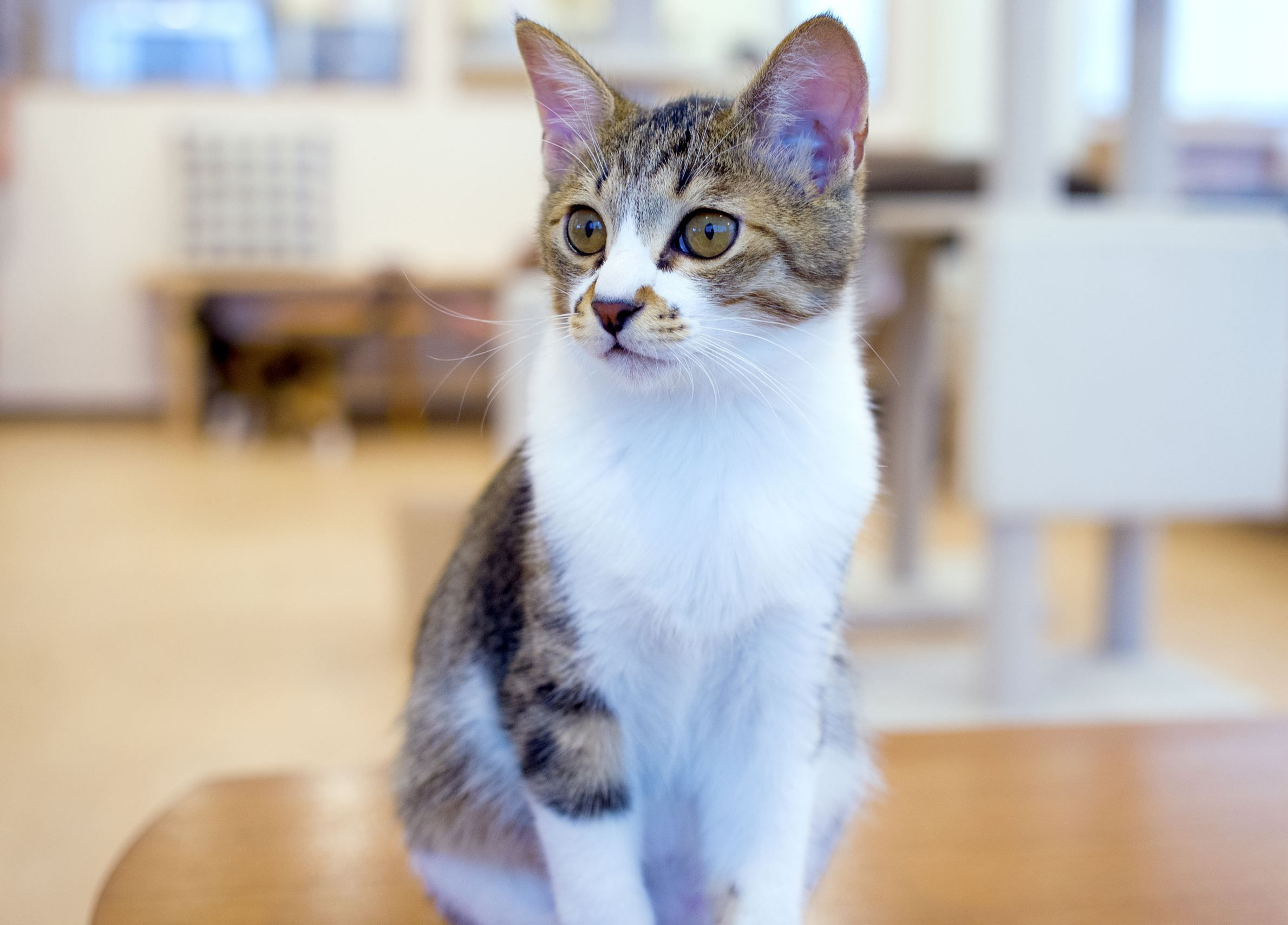 At Cat Cafe In Kanagawa Japan By Kyosuke Cats And Kittens Kittens Cutest Cats