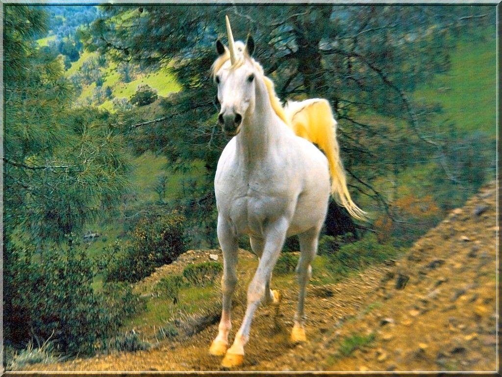 Fond D Ecran Licorne Images Licorne Fond Ecran Fond D Ecran Chat
