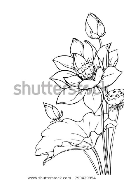Vector de stock (libre de regalías) sobre Ink Pencil Leaves Flowers Lotus Isolate790429954 is part of Lotus art - Descubra Ink Pencil Leaves Flowers Lotus Isolate imágenes de stock en HD y millones de otras fotos, ilustraciones y vectores en stock libres de regalías en la colección de Shutterstock   Se agregan miles de imágenes nuevas de alta calidad todos los días