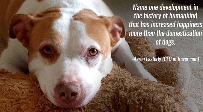 26 Inspirational Quotes about Dogs to Brighten Any Dog