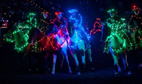 Horse Lights Fiber Optic Decoration Show Rodeo Parade Barn Night Equestrian