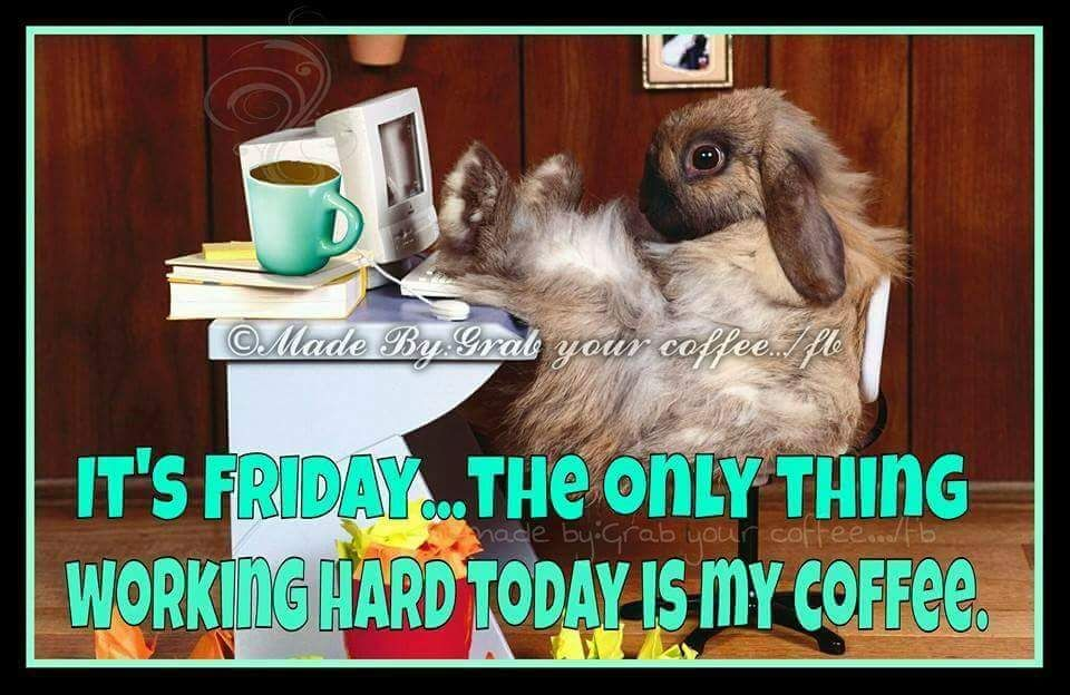 Good Morning Funny Coffee Meme : Rabbit meme funny friday coffee quote good morning