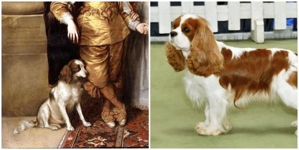Las Razas De Perros Antes Y Despues Razas De Perros Perros