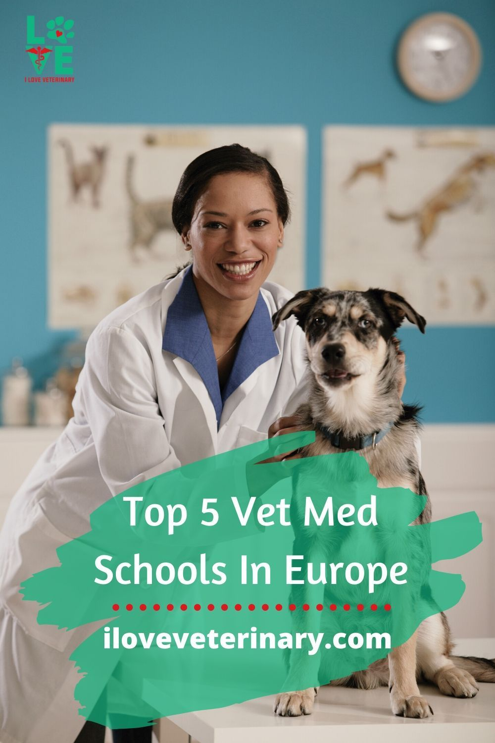 Top 5 Vet Med Schools In Europe I Love Veterinary Vet Med Animal Doctor Vet Assistant