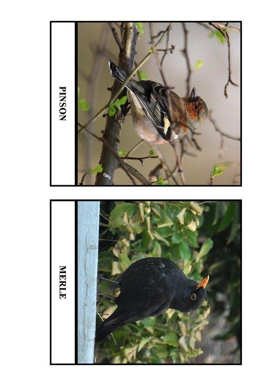 Imagier des oiseaux de chez nous - Page 4