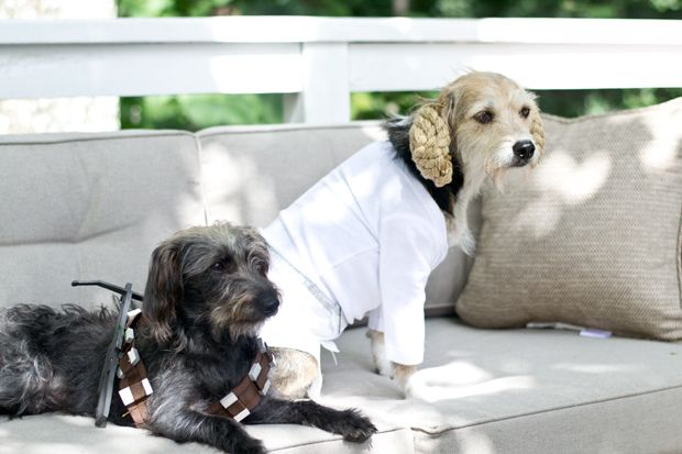 sarah m. dorsey designs: MichaelsMaker   DIY Halloween Costumes for dogs