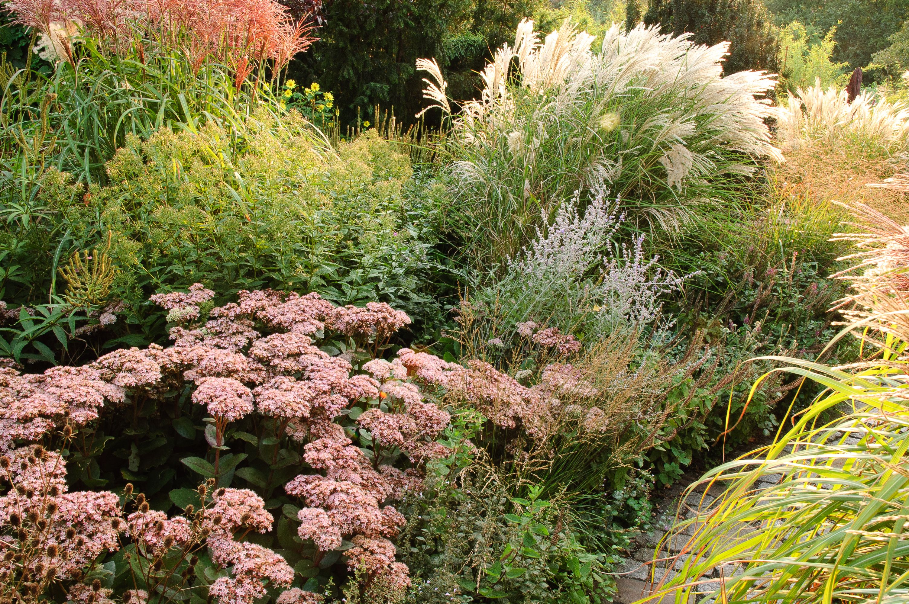 how to design with ornamental grasses. | Ornamental ...