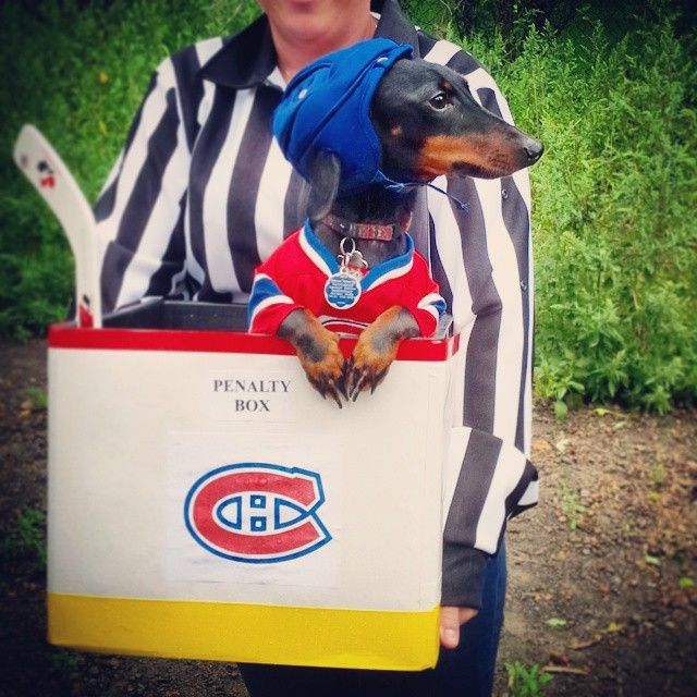 Two Minutes For Biting Zdeno Chara Best Dog Costume Ever Habs Montreal Canadiens Dachshund Wienerdog H Wiener Dog Dog Football Best Dog Costumes