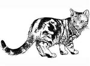 Warrior Cats Coloring Book Ajilbab Portal Com 1900x1400px Coloring