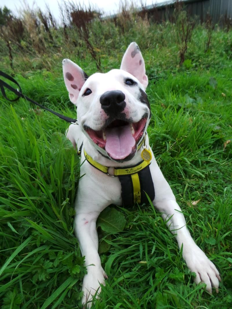 Diesel Dogs Trust Dogs Trust Dogs Dogs For Adoption Uk