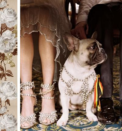 Beautiful Shoes For You Beautiful Harness For Your Puppy Cute Animals Bulldog Animals