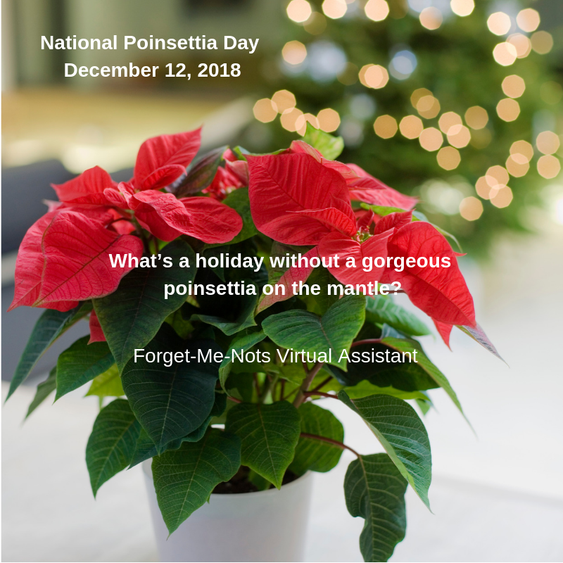 National Poinsettia Day Inspirational Quotes Encouragement Poinsettia Plant Poinsettia