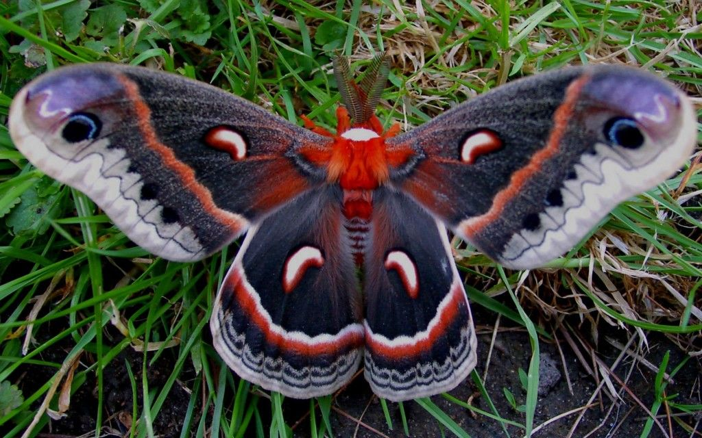 unique butterflies | Butterfly Unique Look wallpapers | Unique Nature HD Wallpapers