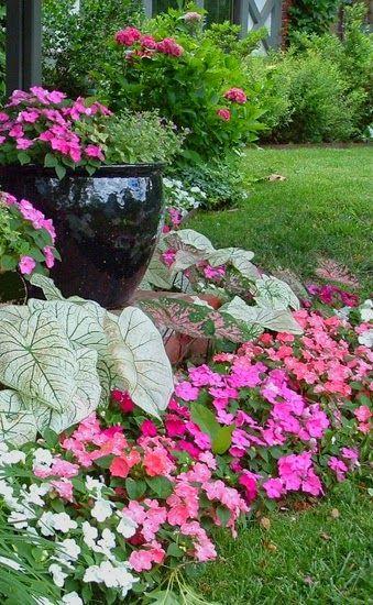 encuentra este pin y muchos ms en bellos jardines de flores y plantas
