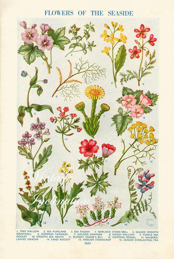 1925 Antique Flower Art Print Flowers Of The Ot Vintageinclination Flower Prints Art Flower Art Botanical Flower Art