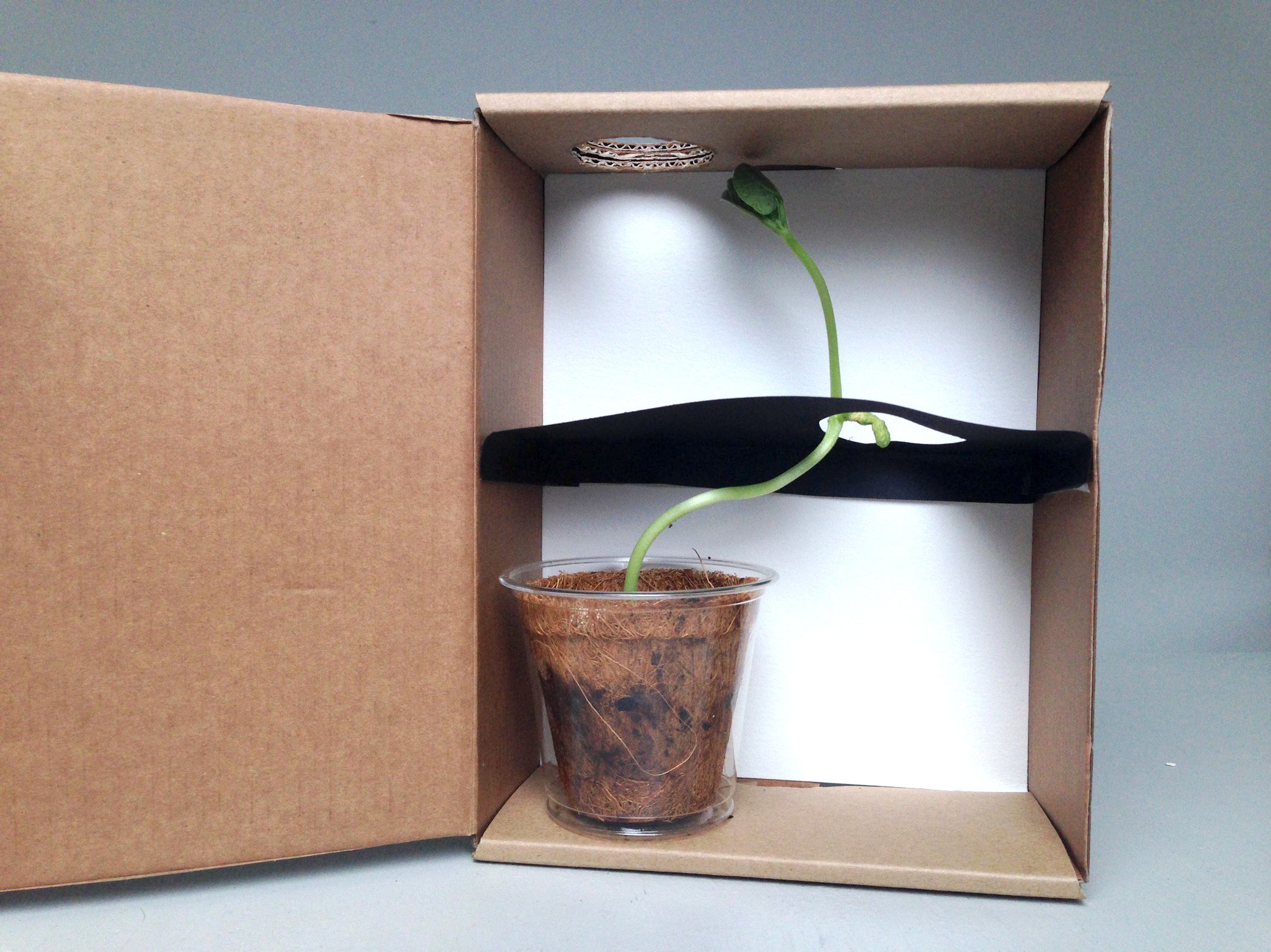 Have you ever noticed how plants grow toward the light? Build this ...