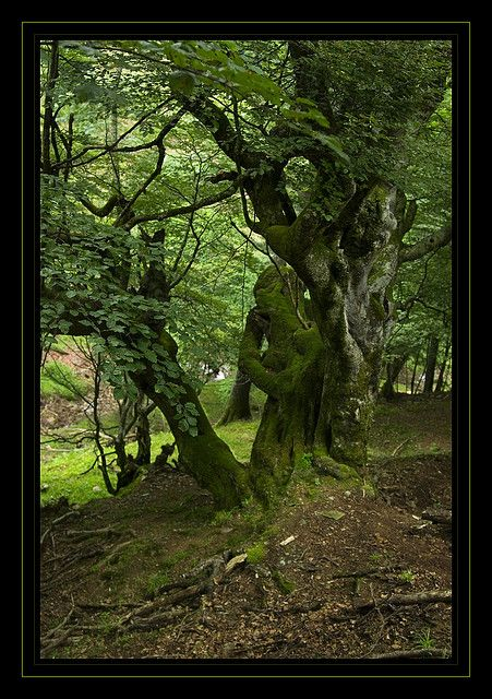 Teverga Es Un Entorno Lleno De Bosques Asturias Spain Bosques De Espana Bosque Paisaje Increibles