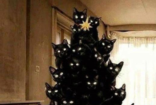 Your Creepy Black Cat Christmas Tree Has Arrived