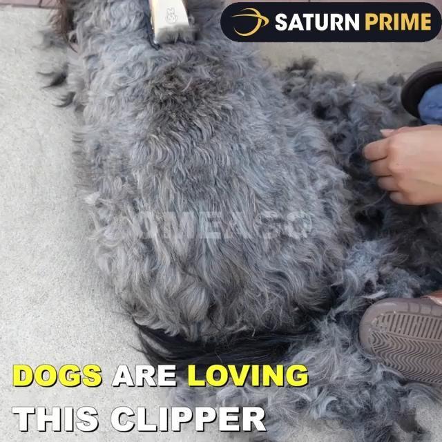 13 Ideas De Repelente Para Perros En 2021 Repelente Para Perros Perros Cosas Para Perros