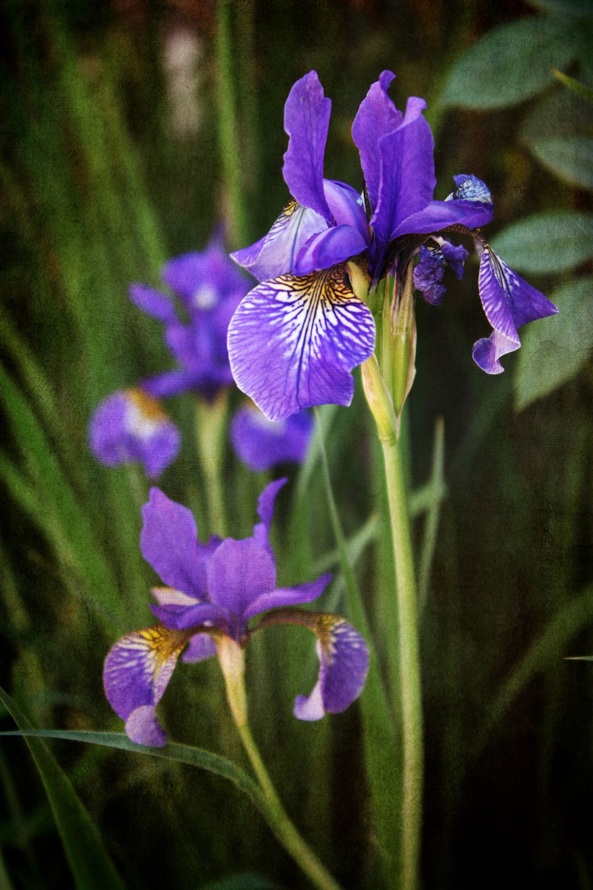 56 Gorgeous Flowers For Every Part Of America Purple Paradise