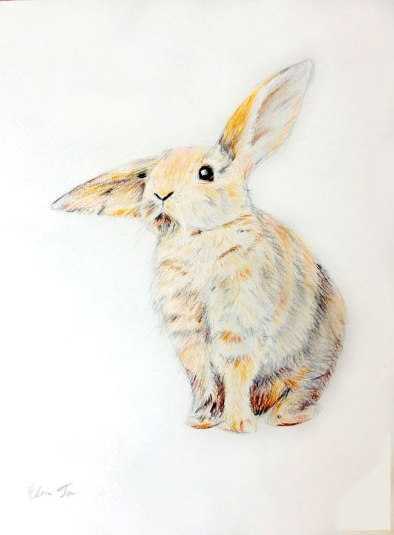 Original Colored Pencil Drawing Fluffy Bunny by NatureDrawings