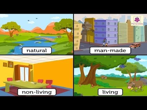 Natural And Man Made Things Environmental Studies For Kids Grade 3 Vid 1 Youtube Environmental Studies 2nd Grade Worksheets Science And Nature