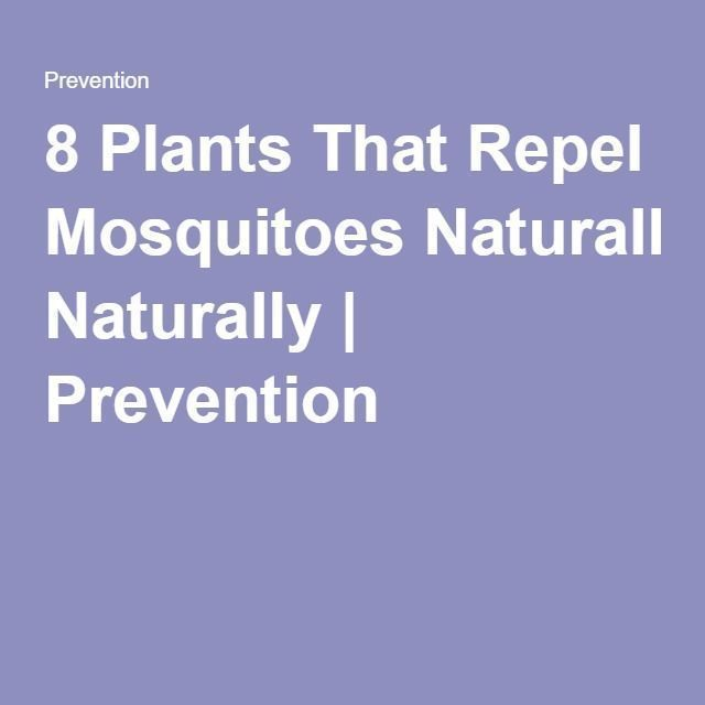 That Repel Mosquitoes Naturally 8 Plants That Repel Mosquitoes Naturally  Prevention8 Plants That Repel Mosquitoes Naturally  PreventionPlants That Repel Mosquitoes Natur...