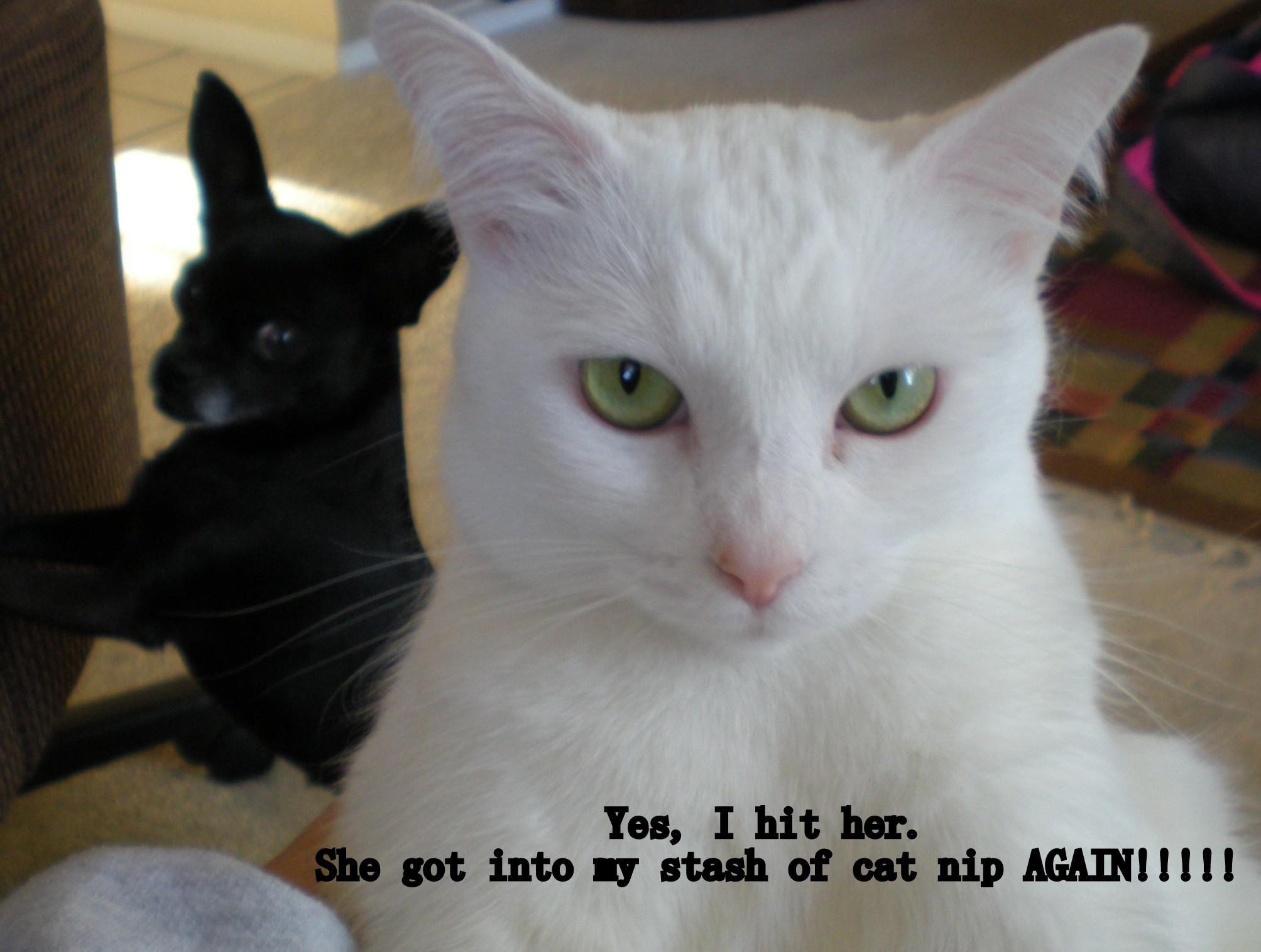 siblings, what can u do? Cats, Animals, Siblings