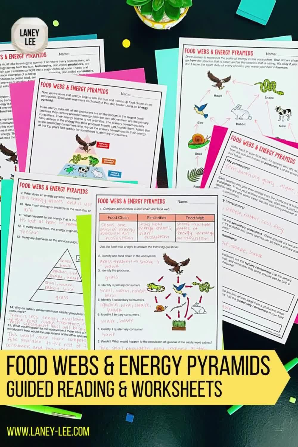 Food Chains Food Webs Energy Pyramids Guided Reading Worksheets Video In 2021 Guided Reading Worksheets Middle School Science Middle School Science Class [ 1500 x 1000 Pixel ]