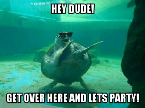 Party time turtle