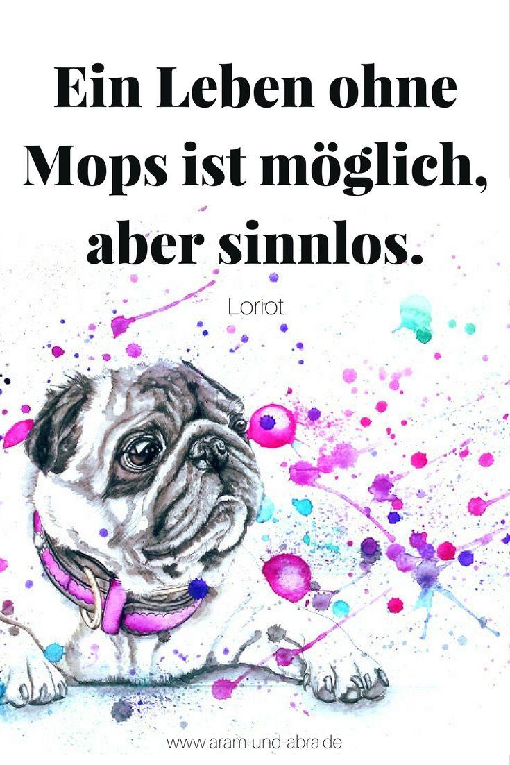 Mops Leo vom Hundefriseur Feingemacht | Animal