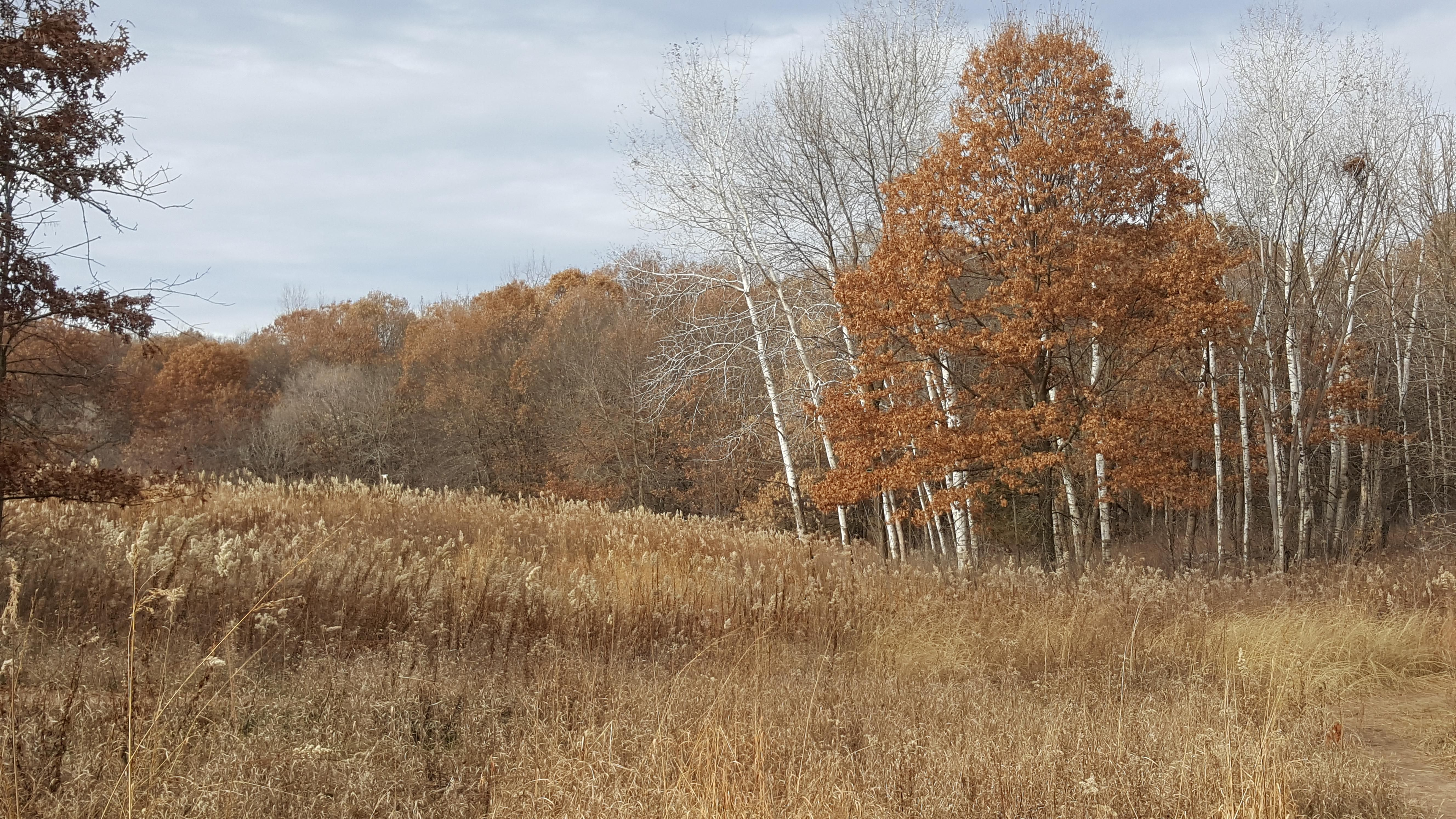 This Minnesota fall landscape like a Bob Ross painting #nature #teesylvania #photos #amazingworld #world #amazingphotography #naturephotography #photography #incrediblephotos Check out teesylvania.com to find out how you can support the forests with style!