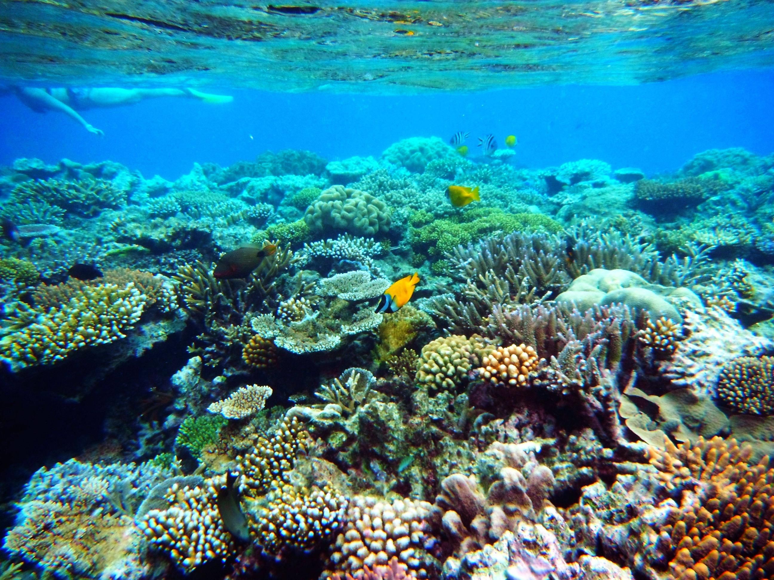 Underwater Coral Reef Background Pictures Wallpaper