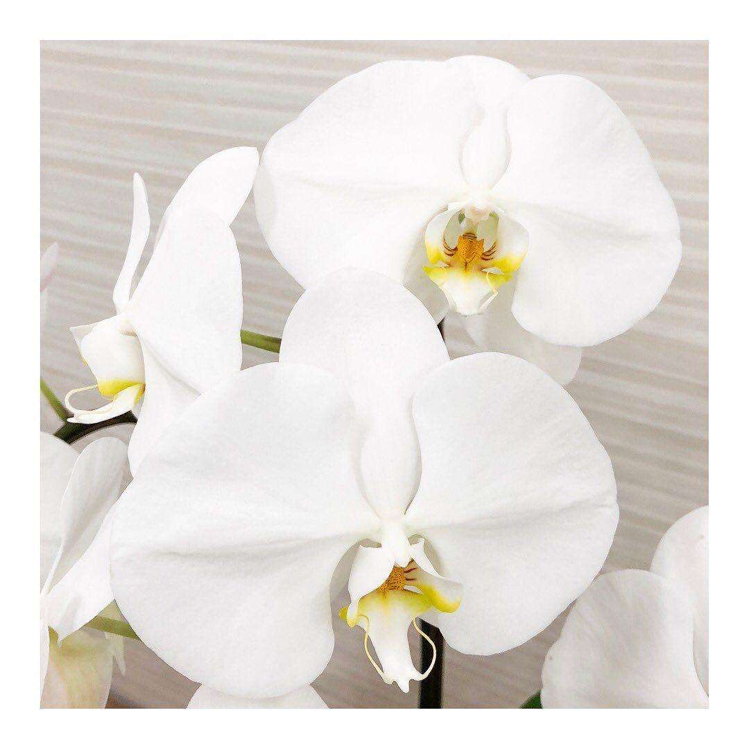 3f orchid    phalenopsis  artgreen      flowers  flowerstagram  instaflower               flowerphotography  flowerphoto