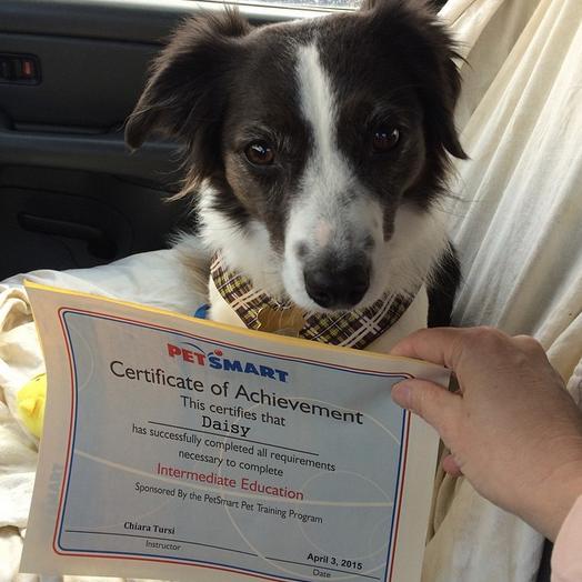 Proud Pet Parents Can T Help But Show Off Their Kids Achievements
