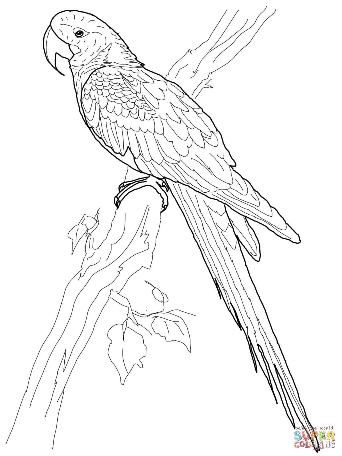 Resultado de imagem para desenho de arara para colorir | AVES ...
