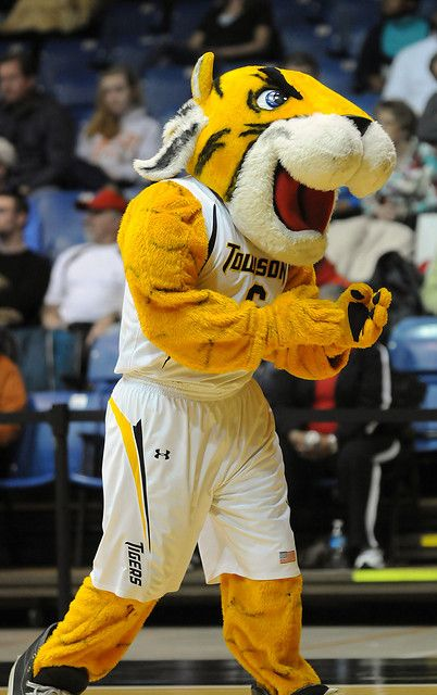 Image result for Towson Tigers Doc Mascot Monday