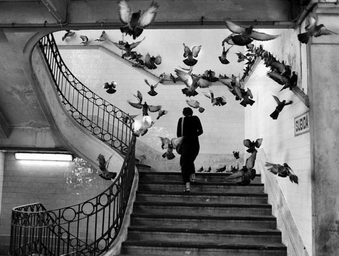 27 Most Famous Photographers You Need To Know Henri-Cartier Bresson street photo of a woman walking upstairs, a flock of pigeons flying up around her. Famous photographers and their work. You are in the right place about Photography Subjects ideas  Here we offer you the most beautiful pictures about the  Photography Subjects ideas  you are looking for. When you examine the Henri-Cartier Bres #Famous #photographers