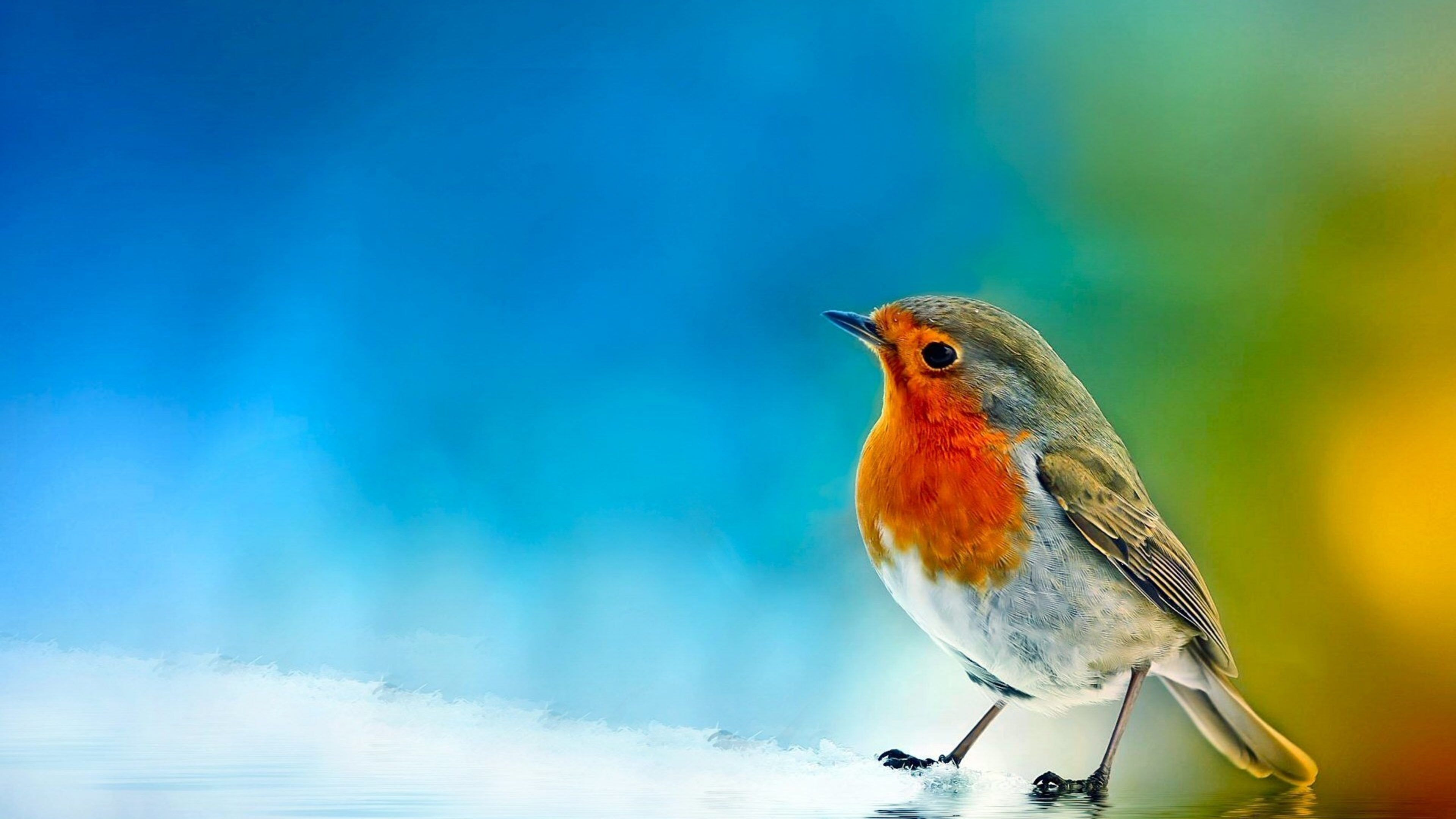 New Birds Pictures Hd Hd Wallpapers Birds Wallpaper Hd Bird Wallpaper Bird Pictures