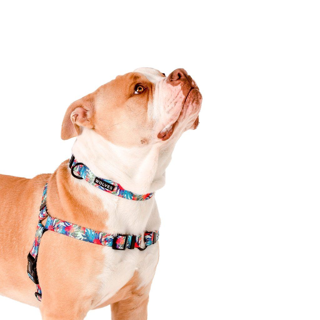 Tropicool Front Clip Harness Dog Harness Puppy Collars Happy Dogs