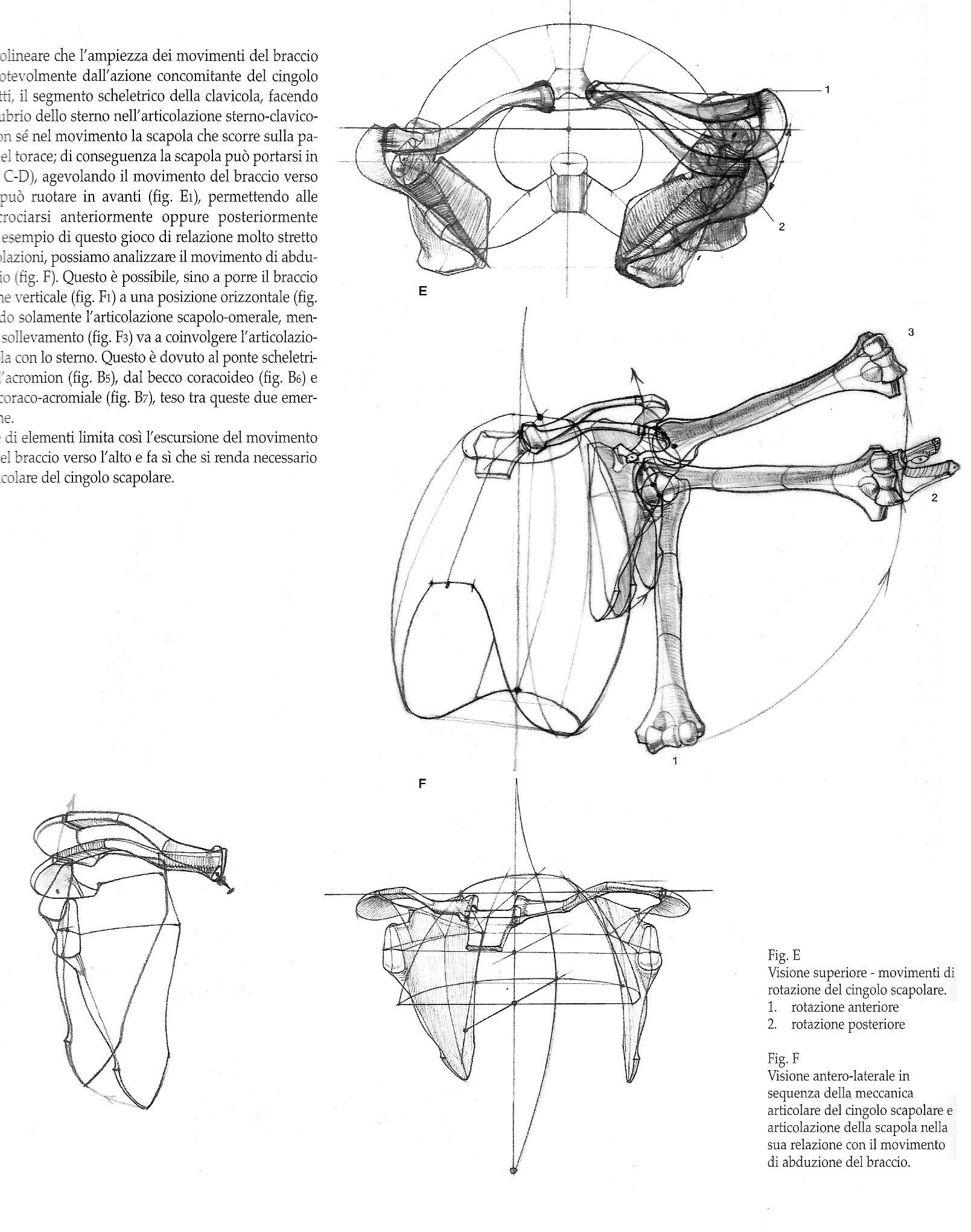 Pin von GB Wei auf 人體結構 | Pinterest | Anatomie, Mensch körper ...