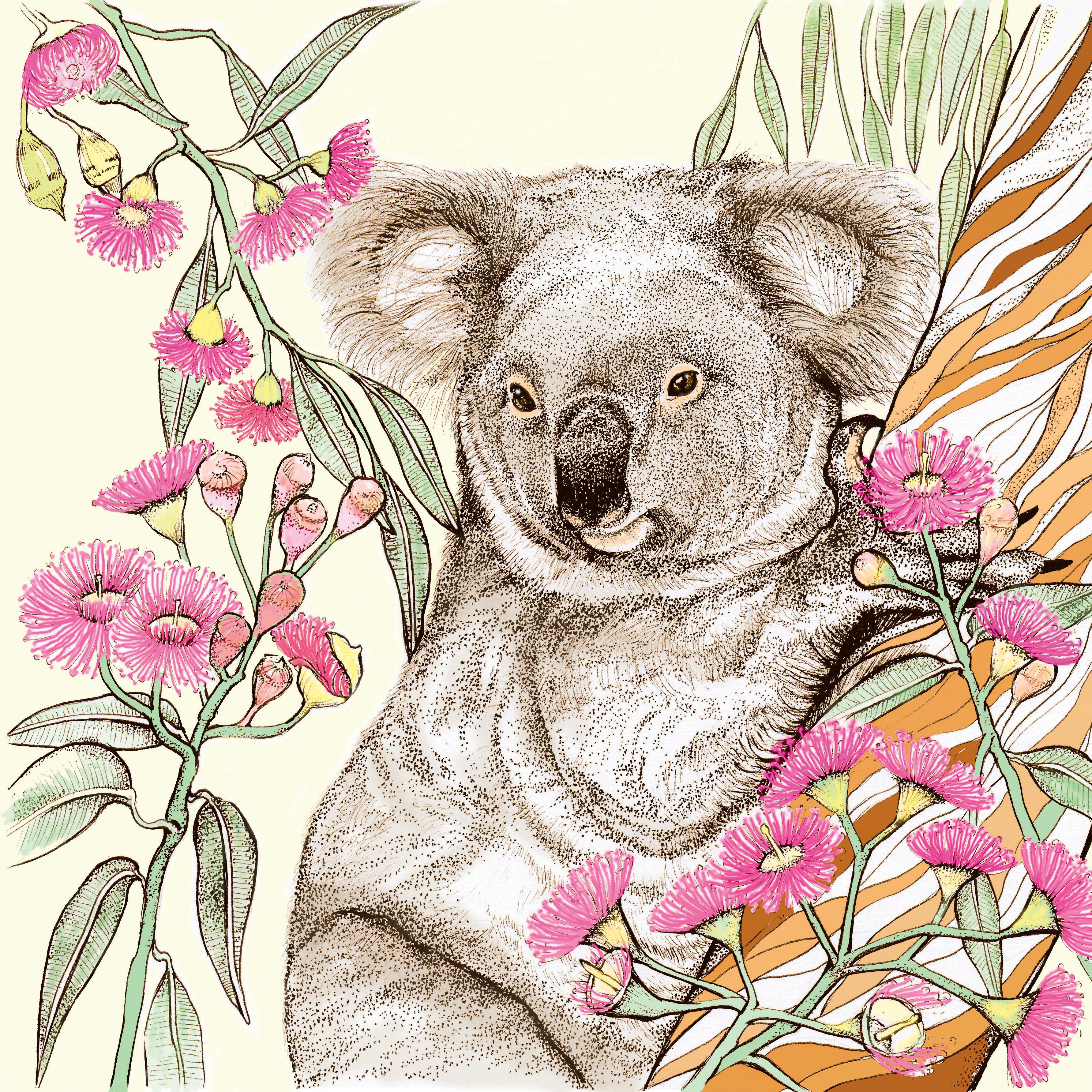 Tw46 Koala Greeting Card In The Wild Greeting Cards Pinterest