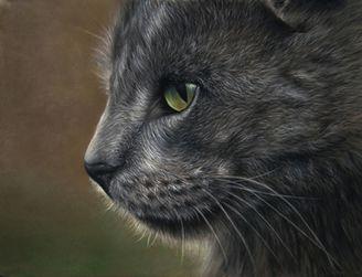Pet Portrait Art Graphite Pencil And Pastel Portraits By Artist