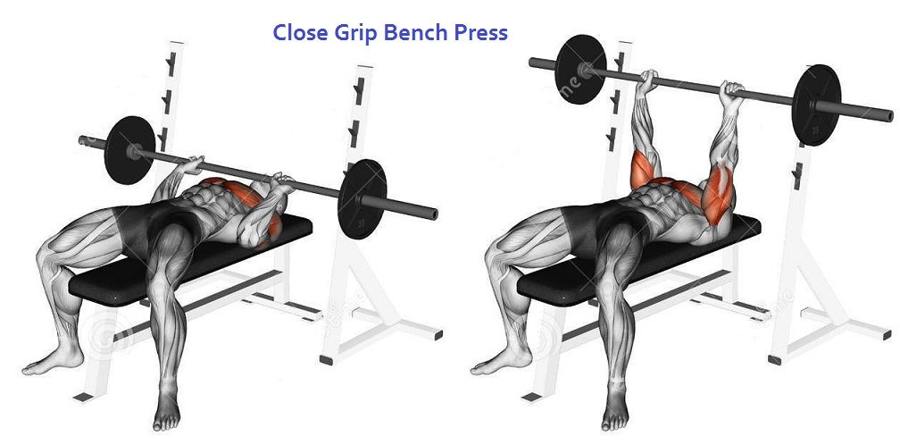 Close Grip Barbell Bench Press Chest MusclesBench PressWorkout ExercisesGym Workout ChartBenchesInner