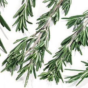 Rosemary Herb 50 Seeds